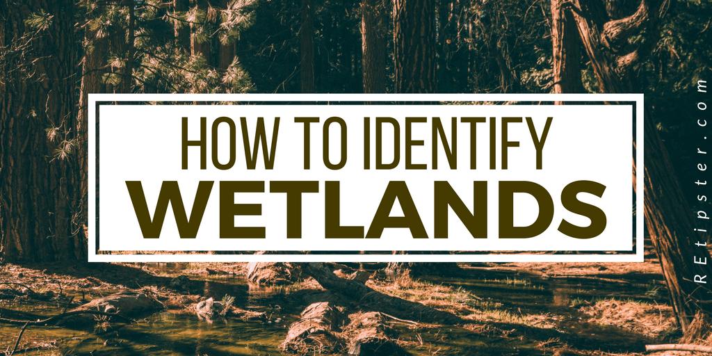 how to identify wetlands